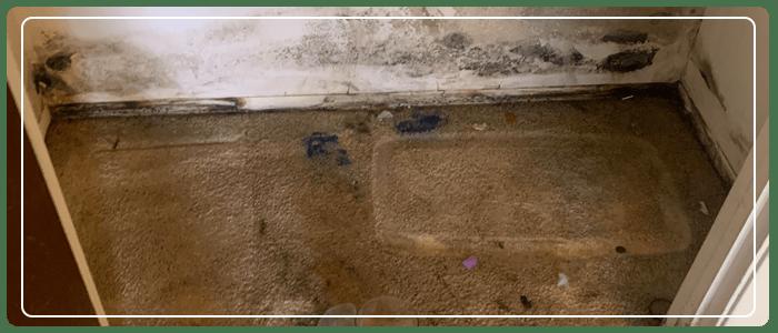 Make Carpet Allergy Free